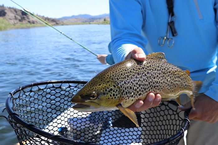 Fly Fishing gear for trout
