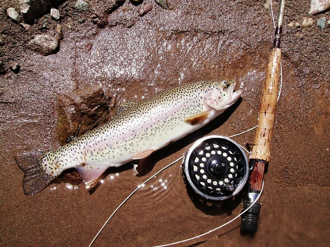 Match Fly Line to your Fly Rod