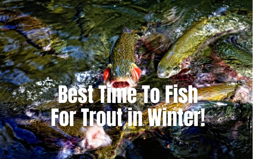 Best time to fish for trout in winter