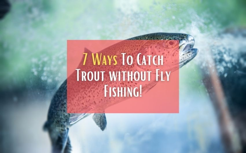 can you catch trout without fly fishing