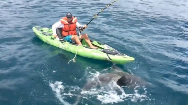 What color do kayaks attract sharks