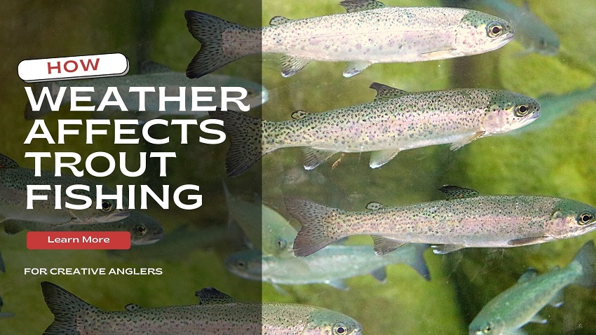 best weather for trout fishing