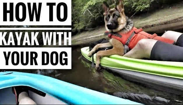 how to kayak with your dog